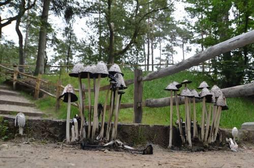 Inktzwammetjes midden in het pad bij de waterval.